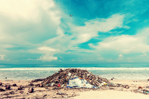 We Need to Save the Ocean. Like, Yesterday